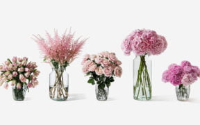 Secrets on how to extend the life of fresh flowers 7
